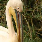Bahrain Zoo by Julian Lowry