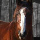 Sweet Pony by ctgponies
