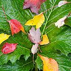 Leaves on Leaves by John Butler