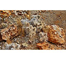 Native Cactus Palomino Valley Photographic Print