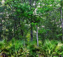 Maritime Forest Panorama by jimcrotty
