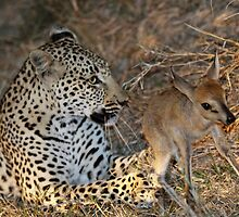 Leopard/duiker interaction 5 by jozi1