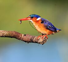the professional fisherbird by ajay2011
