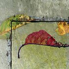 Leaf Portrait #19 by Jane Underwood