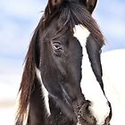 Winter Equine by Kathy Cline
