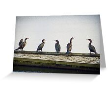 Cormorant Gathering Greeting Card