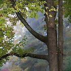 Foggy by saripin
