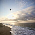 Soaring Over Cape Cod by Stephanie B