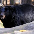 Black Bear by Lolabud