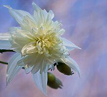 Dahlia imperialis 'California Angel' by Celeste Mookherjee