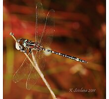 Dragonfly by bluetaipan