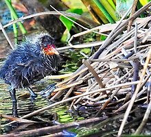a toehold in the nest... by nadine henley