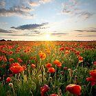 Poppy Sunset by SteveDubois