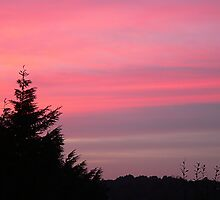 Pink Skies by PollyBrown