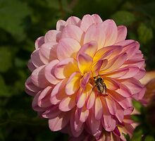 Delilah and a Bee by Terrie Heslop