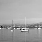 Yachts in Sandy Bay by phillip wise