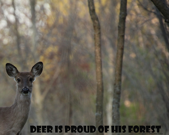 Deer Is Proud of his Forest! by Thomas Murphy