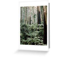 Mountain Ash and Tree Ferns, Sherbrooke Forest. Greeting Card