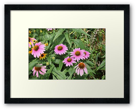 Echinacea 8679 by Thomas Murphy