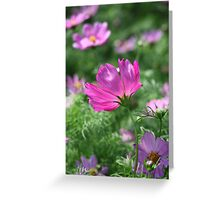 Cosmos Flower 7142 Greeting Card
