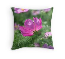 Cosmos Flower 7142 Throw Pillow
