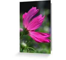 Cosmos Flower 7166 Greeting Card