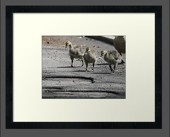 The Gosling Gang by Thomas Murphy