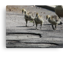 The Gosling Gang Canvas Print