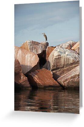 Blue Heron on Red Rock by Thomas Murphy