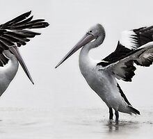 White Pelicans by Kristian Bell