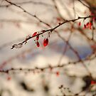 More Red Berries in Winter by goddarb
