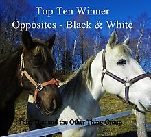 Top Ten - Opposites Black & White by quiltmaker