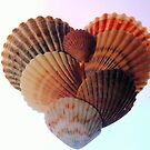 Seashell Heart by Robin Lee