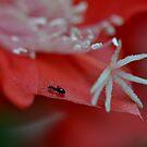 Ant Power by Linda Cutche