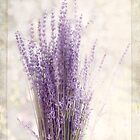 Lavender Bunch by Margi