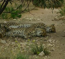 Sleeping Together by RobsVisions