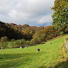 Herdwick sheep grazing near Yew Tree Farm  by Knut P.  Boyum