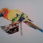 sun conure by lee gordon