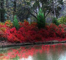 Honor Heights Park - Garden of Lights Azalea Pond by bannercgtl10