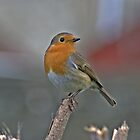 A Lone Robin by Lauren Tucker