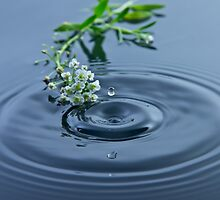 Little Flowers and a Droplet by Riaan Roux