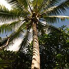 Coconut Palm Tree by nzpixconz