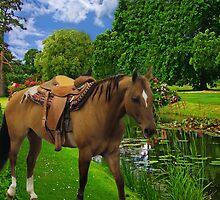 ★ 。* 。*★ 。**SADDLED HORSE READY TO GO ENJOYING THE VIEW  ★ 。* 。*★ 。* by ✿✿ Bonita ✿✿ ђєℓℓσ