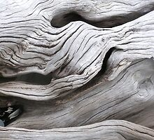 Driftwood by CareyF