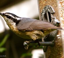 Nuthatch at the Feeder by ingridthecrafty
