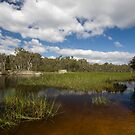 Dunn's Swamp ~ Wollemi National Park I by Lorraine Creagh