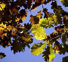 Autumn Colours by SophiaDeLuna