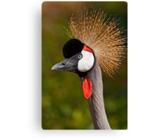 Grey Crowned Crane (Balearica regulorum) Canvas Print