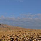 Fernacre Stone Circle by Neil Cox