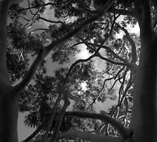 Scary Tree- Ghost Gum, Adelaide Parklands by Ben Loveday